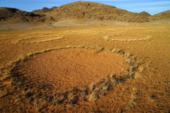 Fairy Circles, Giribes