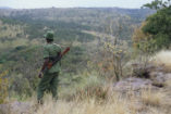 On foot patrol with a ranger in the Serengeti (1995).