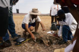 Student excursion, measuring Welwitschia plants in the Damaraland (1998).