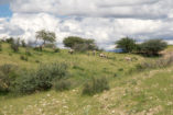 A group of oryx (gemsbok) in Daan Viljoen Game Park.
