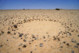 Investigating the unusual circles near Garub in southern Namibia.