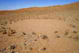 Fairy circles can be also found in the very dry Sossusvlei.