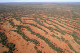 Self-organized plant patterns are particularly known from woody stripes that grow parallel to dry slopes. This image from 2017 shows Acacia trees that catch water along a mountain slope in arid Australia.