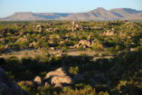 During our drive to the Ongava Lodge you can take a last look at the table mountains of the Damaraland.
