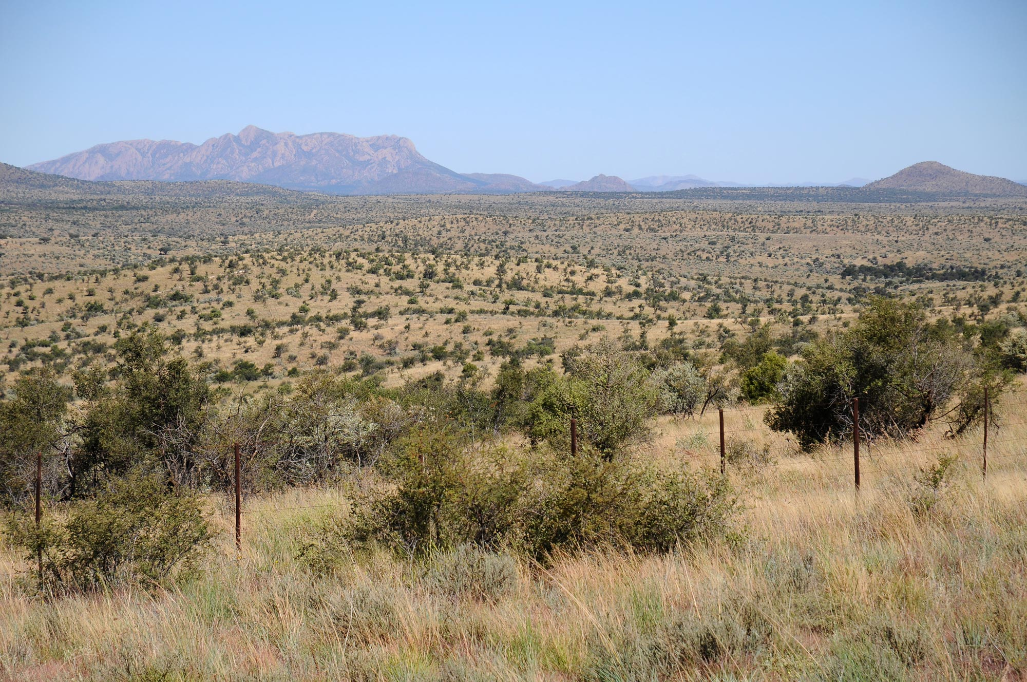 A typical Namibian savanna in the Khomas Highland with scattered trees and bushes. Mean annual precipitation is around 300 mm and the woody plants are quite low.
